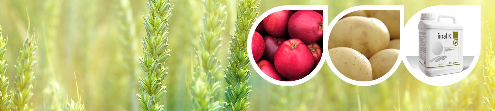 Nouvelle vidéo : Final K, la clé pour améliorer la qualité de votre récolte