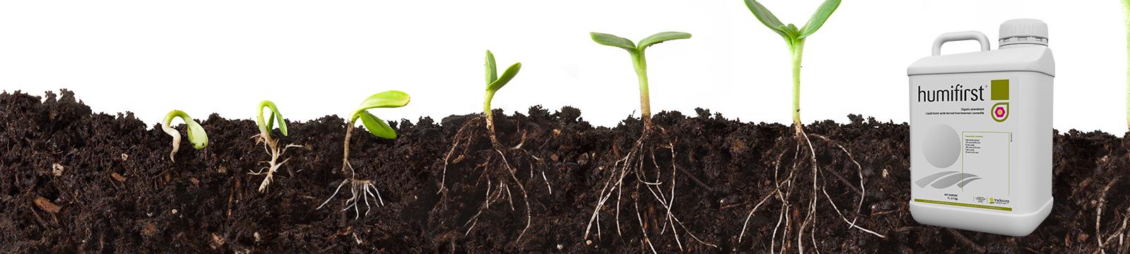 Ne cherchez plus vos racines avec Humifirst !